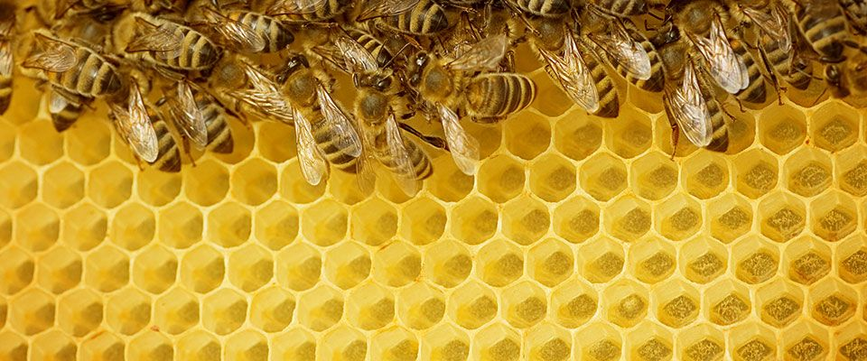 Helping build optimal career paths - bee hive